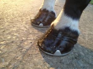 sams foot last